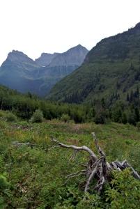 glacierparksmall